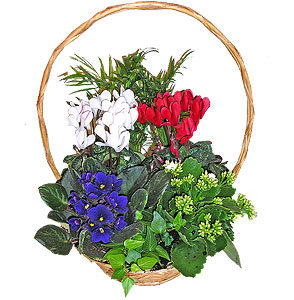 planted-baskets-028-1