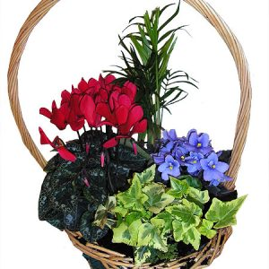 planted-baskets-052.jpg