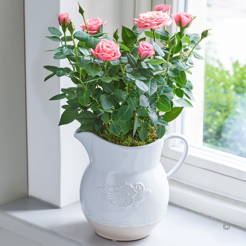Country Style Rose Jug