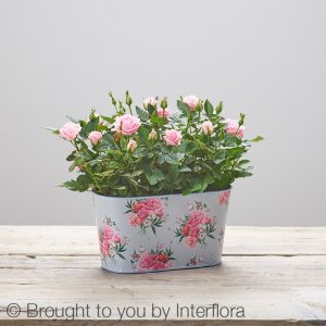 Mother' Day - Rose Planter