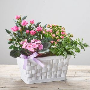 Mother's Day - Planted Basket